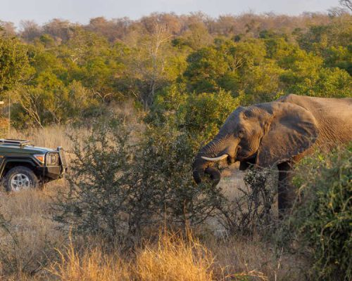 Untamed Game Viewing